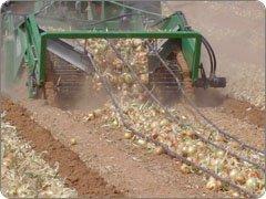 Onion digger