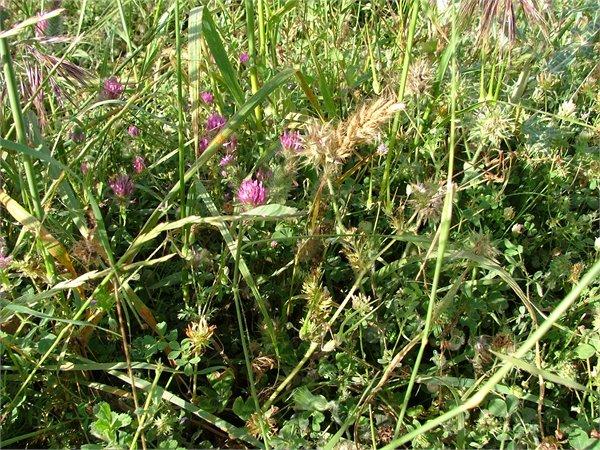 Vegetation response to P fertilization
