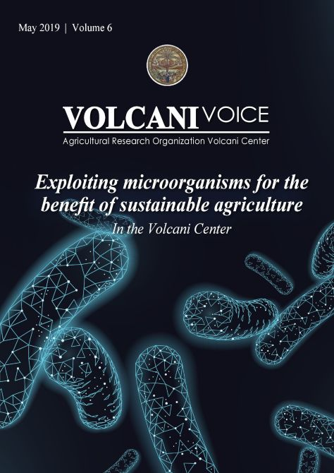 Volcani Voice Vol.6
