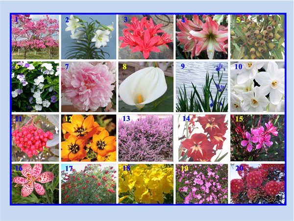 related keywords  suggestions for flowers with names and pictures, Beautiful flower